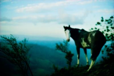 costa-rica-horse